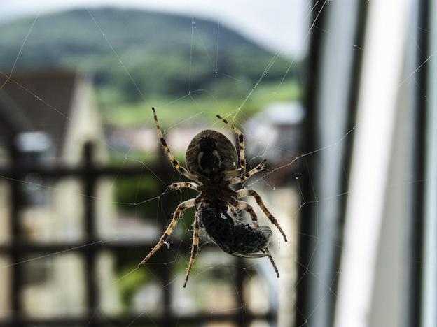 Hábitats de las arañas.