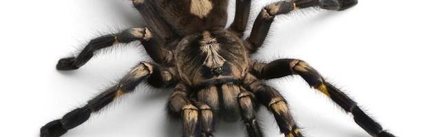 Información sobre Arañas