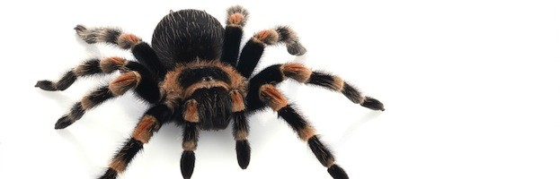 Videos de Arañas