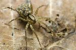 Spider And Spiderlings