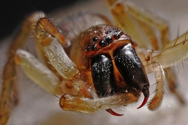 anatomía externa de una araña.