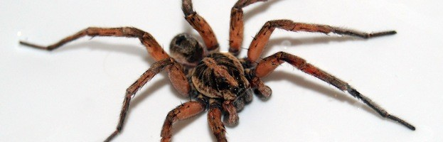 Spider Anatomy - Spider Facts and Information