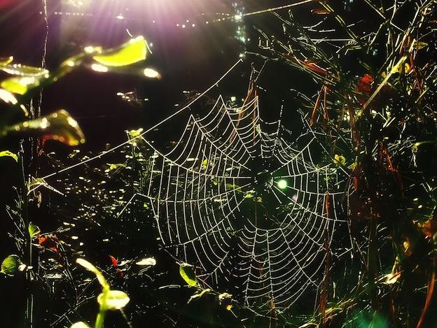 distribución de las arañas.