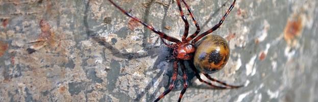 Evolución de las Arañas