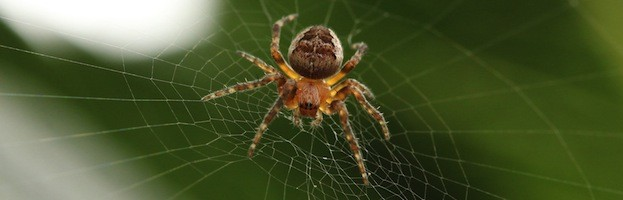 Spider Pictures