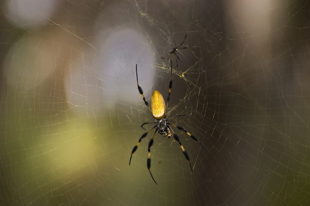 Spider types of webs